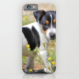 Jack-russell terrier puppy careful iPhone Case