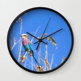 Beautiful Bird Wall Clock