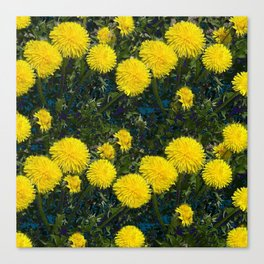 LOVE FIRST SPRING YELLOW DANDELIONS Canvas Print