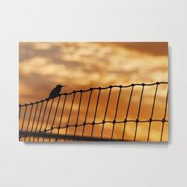 Hummingbird Sunrise Metal Print