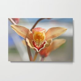 orchid flower ready to fly Metal Print