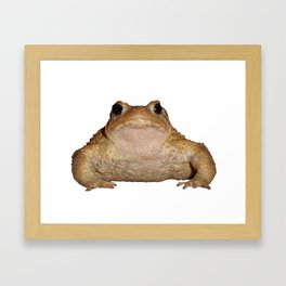 Bufo Bufo European Toad  Isolated Framed Art Print