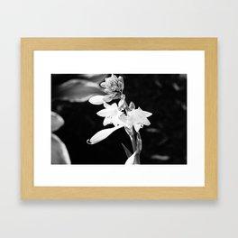 Black-and-White Hosta Flower Framed Art Print