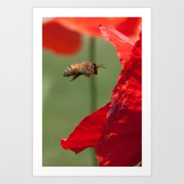 The Levitating Bee Art Print