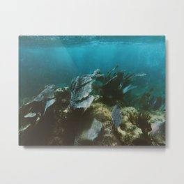 Mexican Caribbean Sealife Metal Print