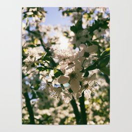 spring is inspiration Poster