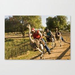 Course d'Autruches // Ostrich Racing Canvas Print