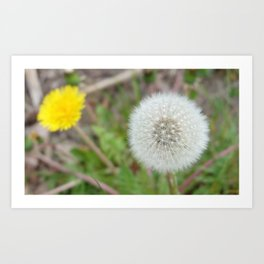 Make a wish with white dandelion puff ball Art Print