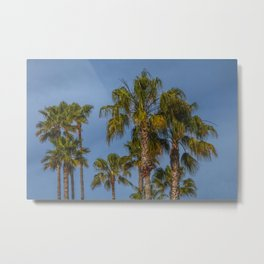 Palm Trees on Laguna Beach in California Metal Print