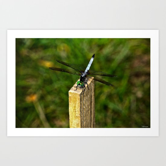 Dragonfly 2.1 Art Print