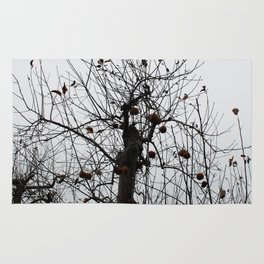Winter's Apples Rug
