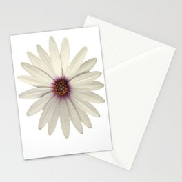Symmetrical African Daisy with White Petals Stationery Cards