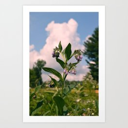Healing Comfrey Plant with Flowers Art Print