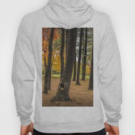 Fall City Park Scene in with Pine and Maple Trees Hoody