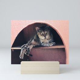 Old Kitty (Lanai Cat Sanctuary) Mini Art Print