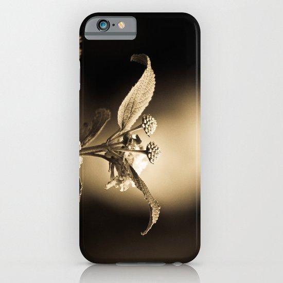 Venus in Flowers iPhone & iPod Case