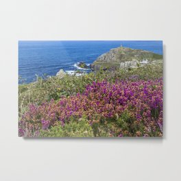 Heather at Cape Cornwall Metal Print