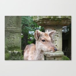 Deer of the Stone Lanterns Canvas Print