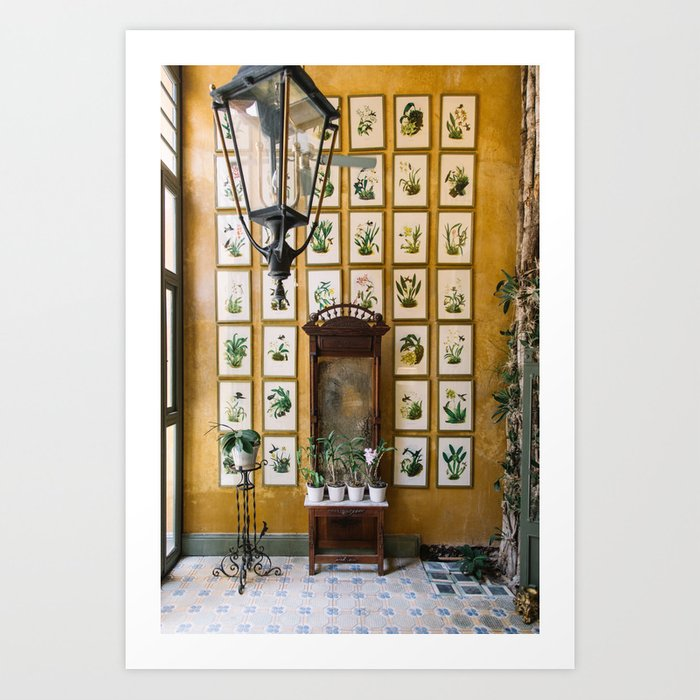 A Wall of Orchids, Merida, Mexico Kunstdrucke
