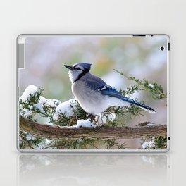 Look Skyward Blue Jay Laptop & iPad Skin