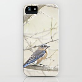 Eastern Bluebird iPhone Case