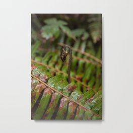 New Fern Growth Rising Above Old in the Pacific Northwest Metal Print
