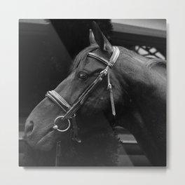 Horse-Head Metal Print