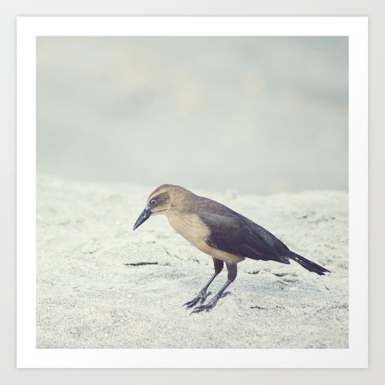 Little Bird I Art Print