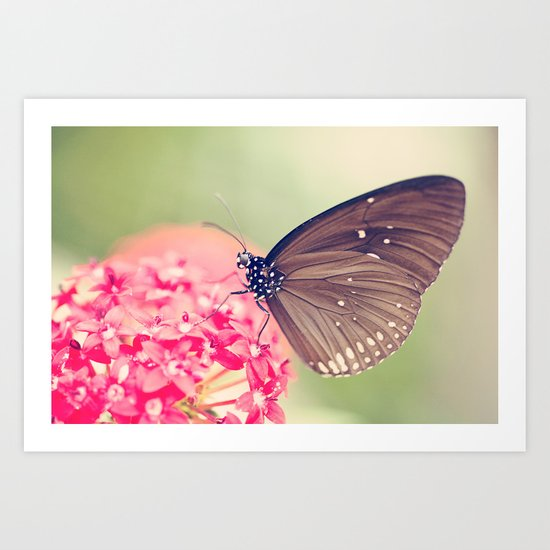 Spotted Black Crow Butterfly Art Print