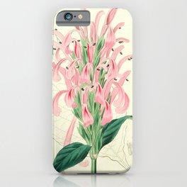 Flower 1397 justicia carnea Flesh coloured Justicia16 iPhone Case