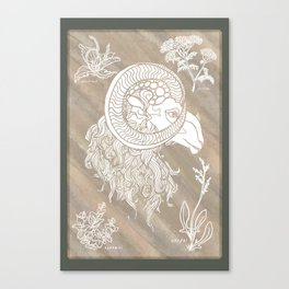 Ram and herbs in white Canvas Print