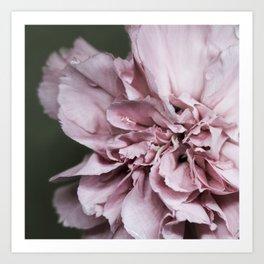 Pink Carnation Mistery Art Print