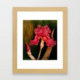 Iris in the Storm Framed Art Print