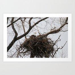 Bald Eagle on a Nest Art Print