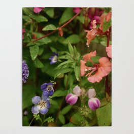 Wildflower Garden In The Morning Poster