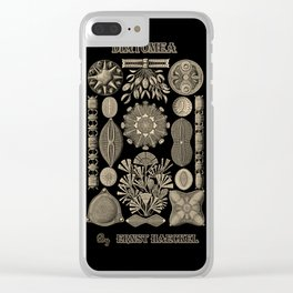 """""""Diatomea"""" from """"Art Forms of Nature"""" by Ernst Haeckel Clear iPhone Case"""