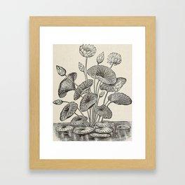 Water Lillies Framed Art Print