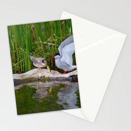 Baby Arctic_Tern Feeding - Alaska Stationery Cards