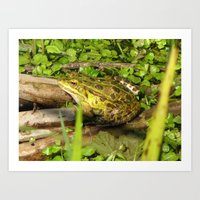 frog Art Prints featuring frog by giol's by gianalberto oliva