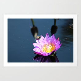 Purple Water Lilly with Bee Art Print