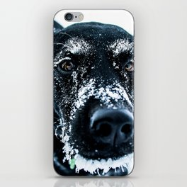 Snow Dog // Cross Country Skiing Black and White Animal Photography Winter Puppy Ice Fur iPhone Skin