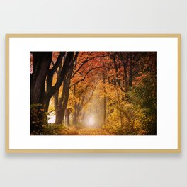 Autumn Fall Forest Path -  Nature Landscape Photography Framed Art Print