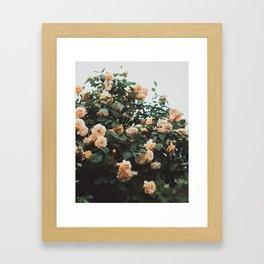 peaches and cream Framed Art Print