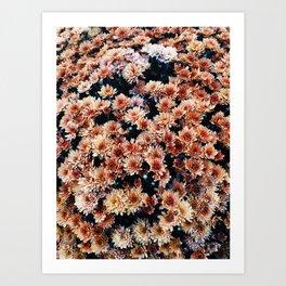 Autumnal Mums Art Print