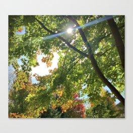 Blue Streak of Sunshine Amongst Autumn Tree's Canvas Print