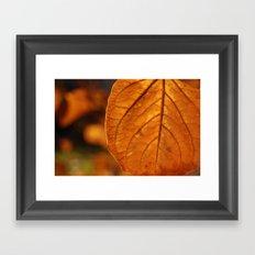 Sun-drenched leaf Framed Art Print