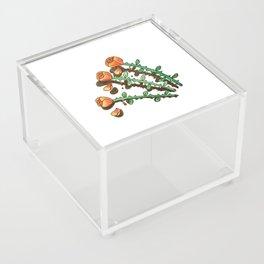 Shady Lady Acrylic Box