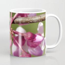 Flowering Redbud with Ladybug Coffee Mug