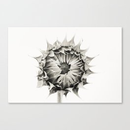 Sunflower No. 9 Canvas Print