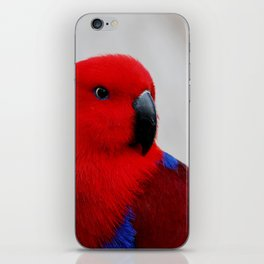 Eclectus Parrot iPhone Skin
